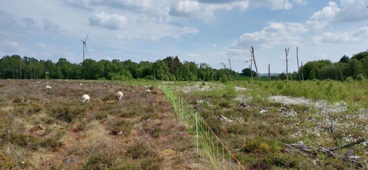 Grazed and ungrazed bog separated by electric fence