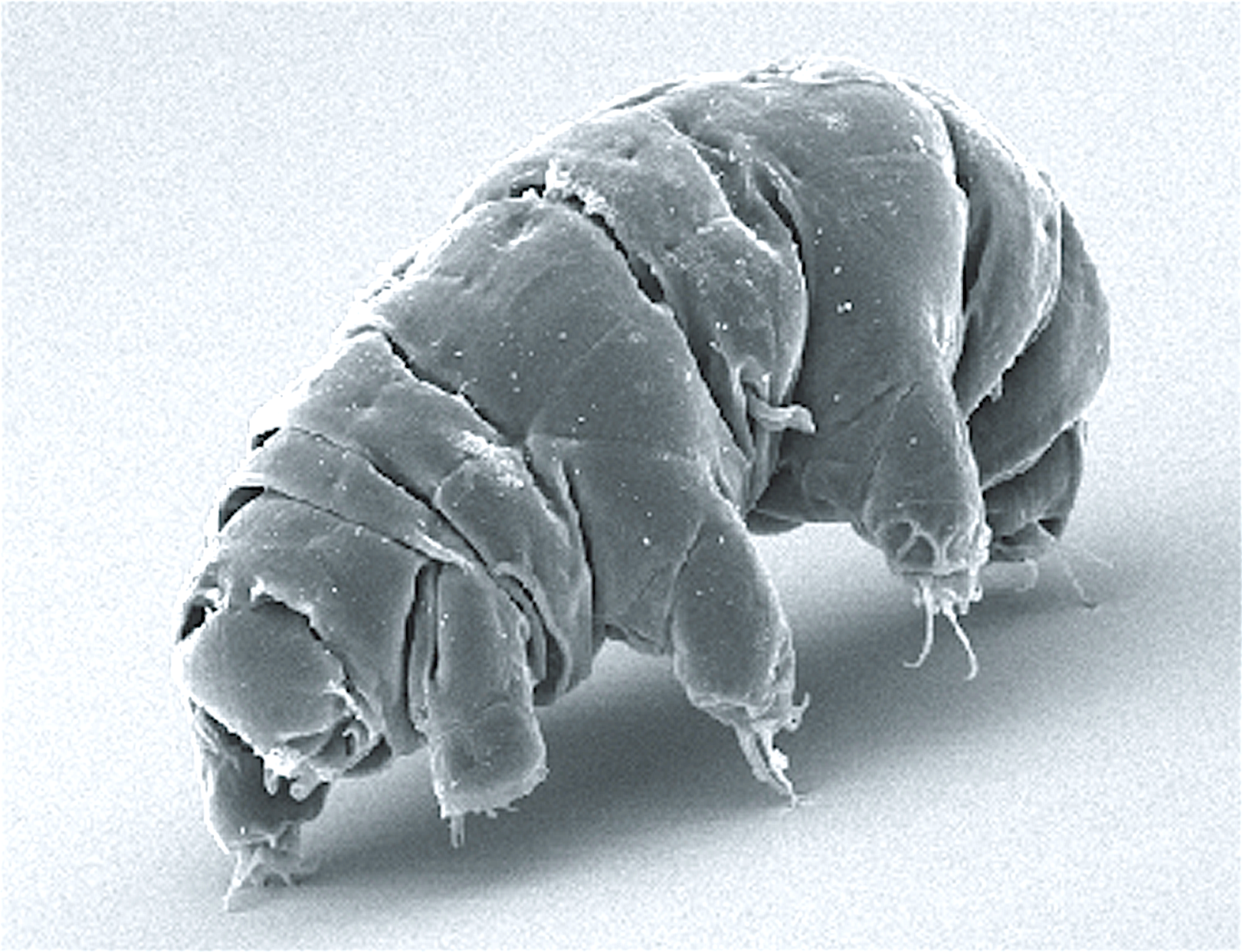Tiny teachers: how water bears have inspired the Trust to develop more resilient systems