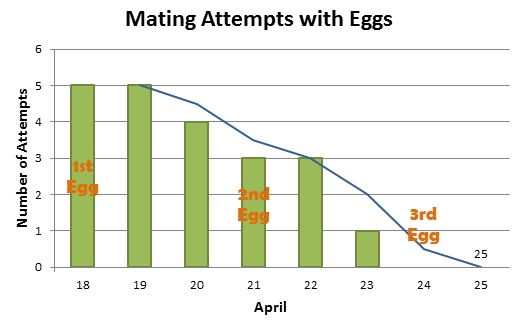 Mating Attempts and Eggs 2013