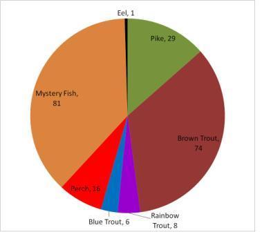 Fish Pie Chart - 23.6.13