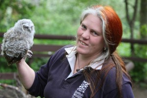 owl rescue 2