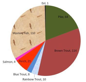 Fish Pie Chart  - 28.7.13