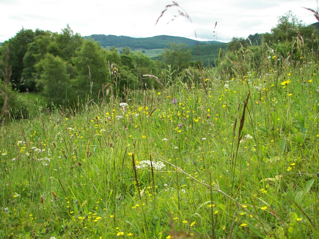 Meadow blog pic