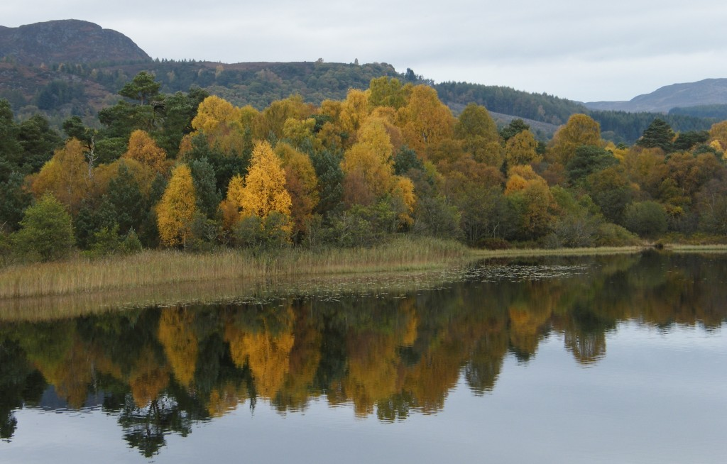 Autumn at Loch of the Lowes
