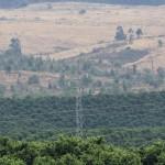 Pylon amongst orchards