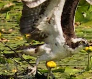 male spot 3