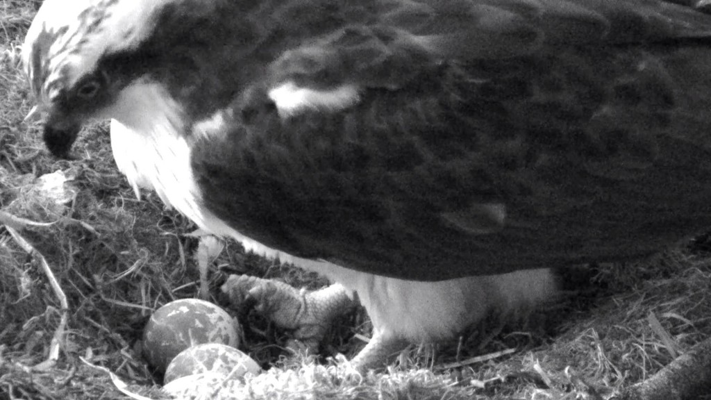 First glimpse of the 3rd egg