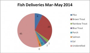 51 days of fish deliveries, from 31st March – 20th May 2014.