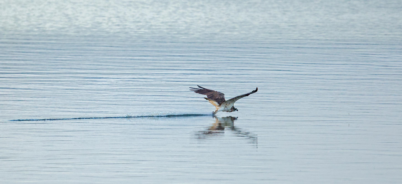 Osprey talon washing- copyright Ray Leinster