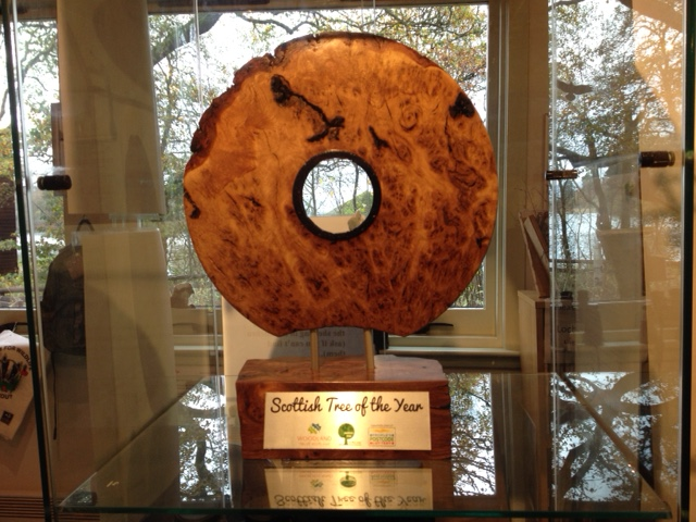 The Scottish Tree of the Year Trophy - © Marion Moore