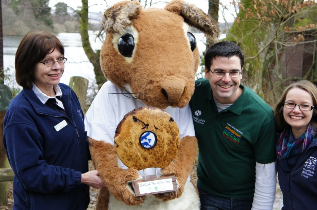 Sandy the Squirrel with the Scottish Tree of the Year trophy ©Scottish Wildlife Trust