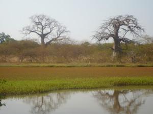 Baobolong Wetlands (Credit: Eduard Garcia)