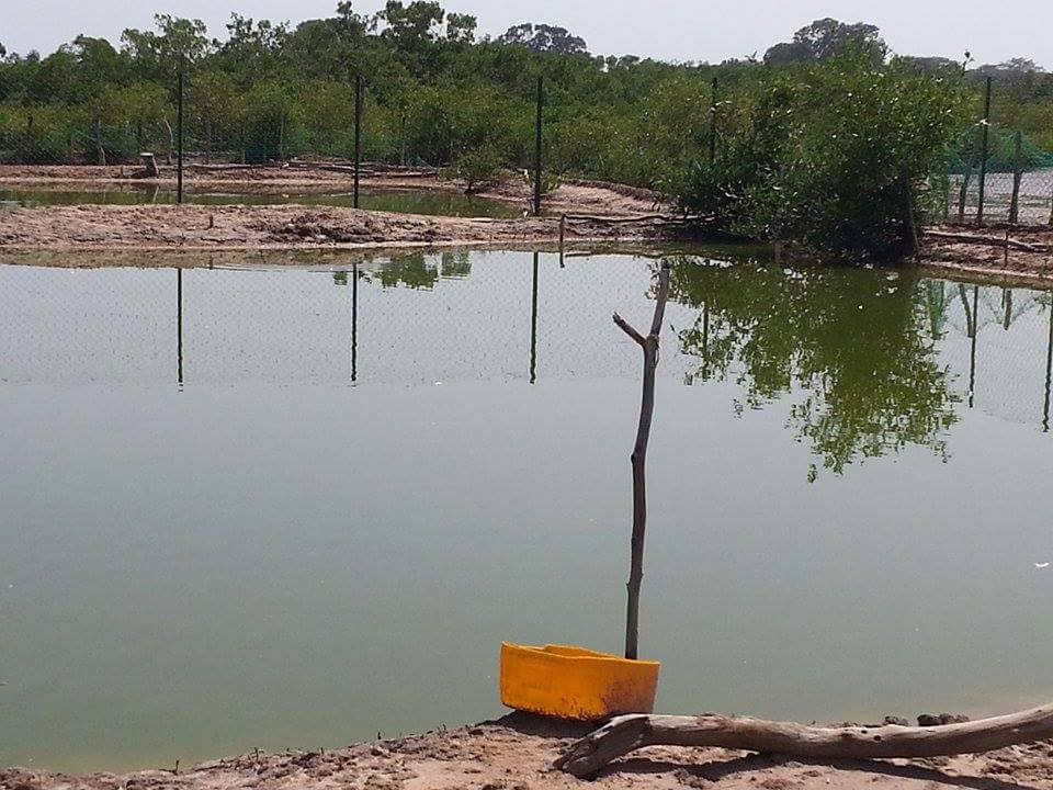 Fishing ponds (Credit: Fansu Bojang)