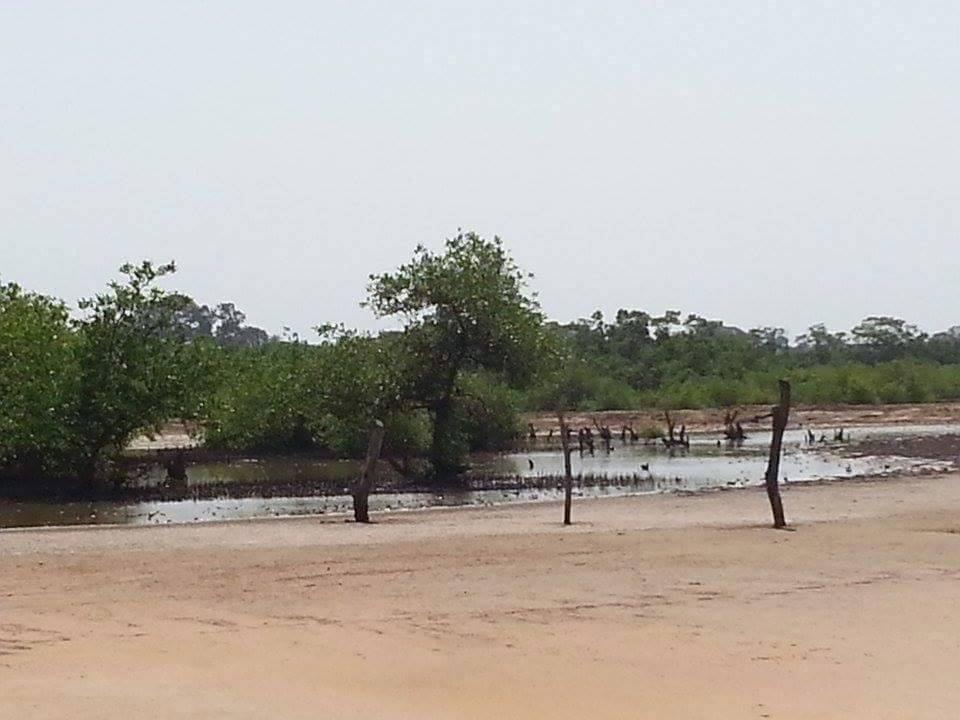 N'Demban river (Credit: Fansu Bojang)