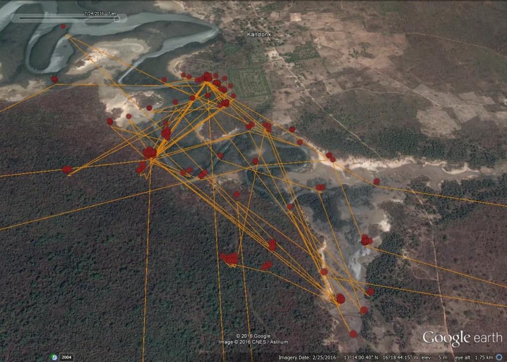 FR3's activity within the bolon near Kandonk ©Scottish Wildlife Trust