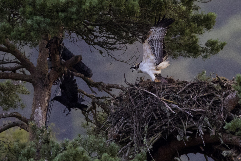 Get off my nest! ©Steve Earle