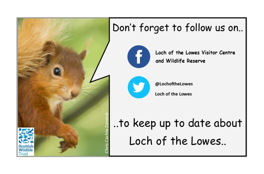 swt-loch-of-the-lowes-facebook-page-squirrel