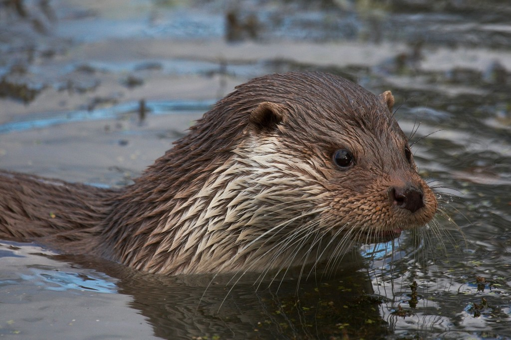Otter © Elliot Smith