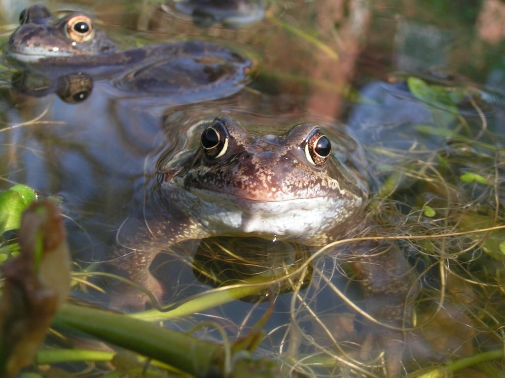 Frog (c) Richard Burkmar