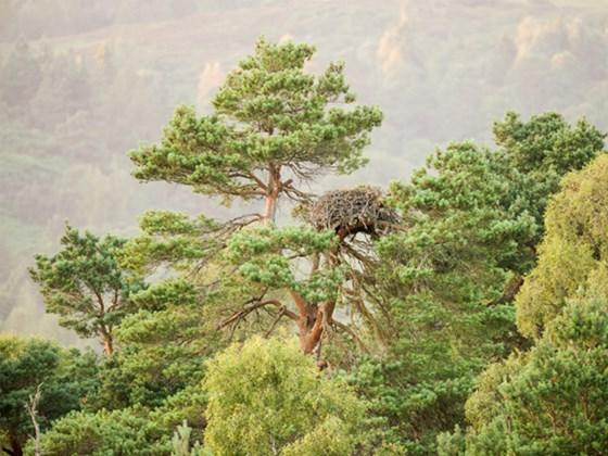 Lady's Tree