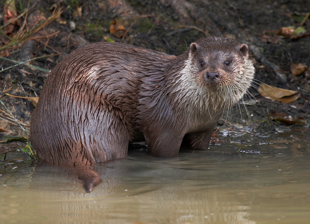 Otter (c) Elliot Smith