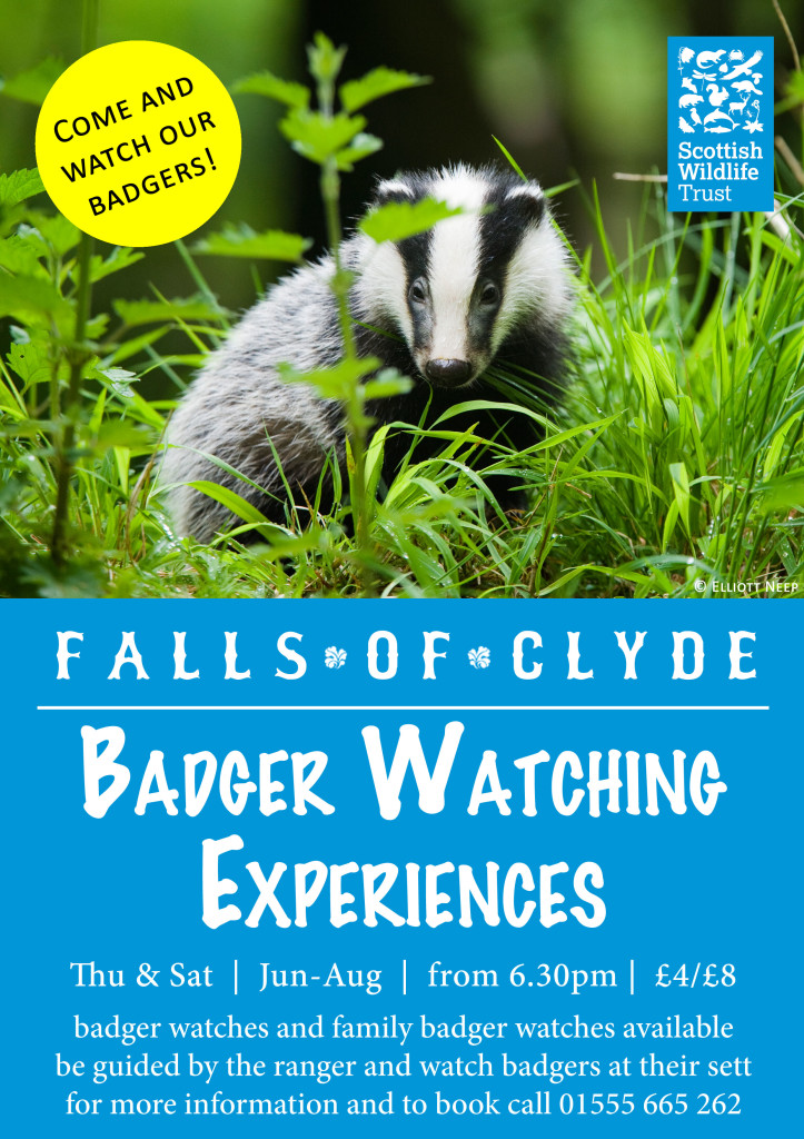 Badger Watch 2015