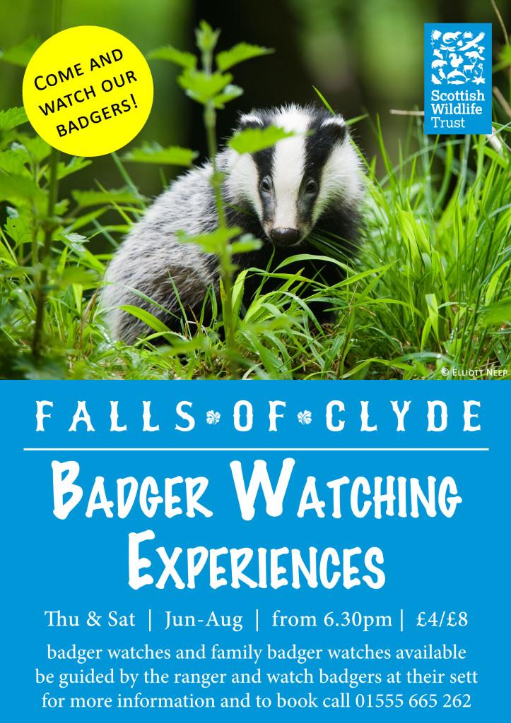 Badger Watch 2015