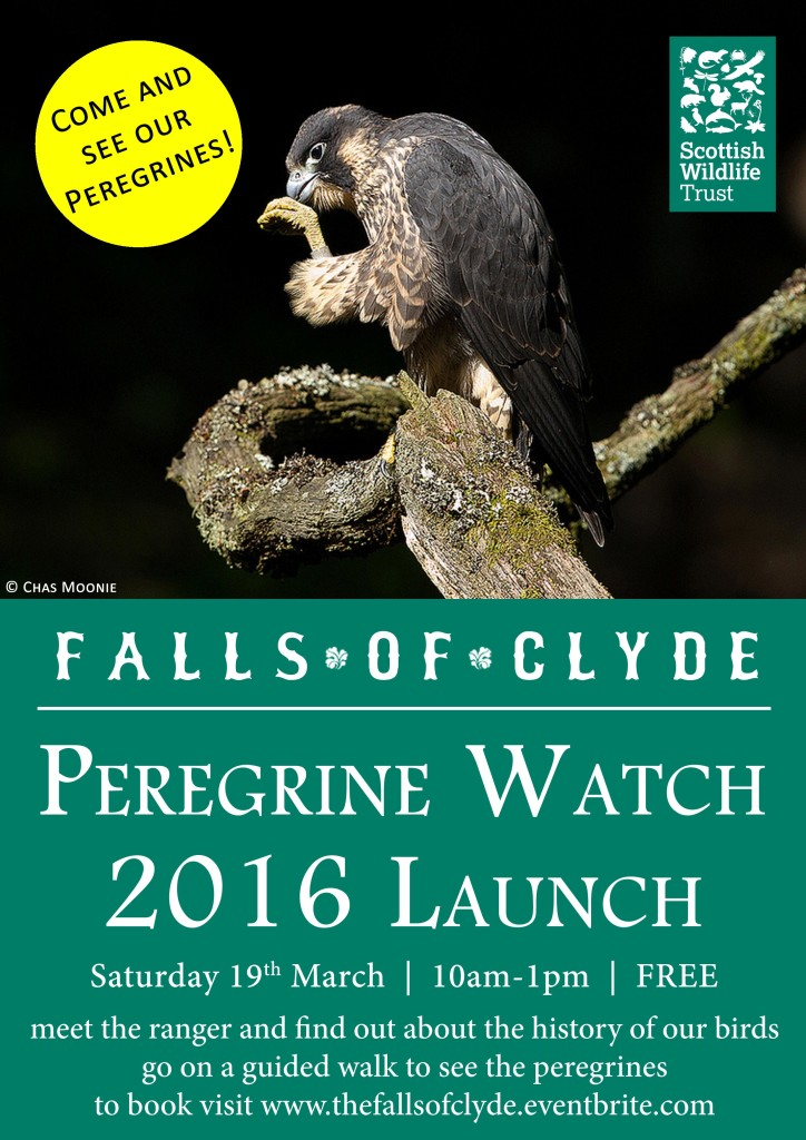 Peregrine-Watch-2016-Launch-A4