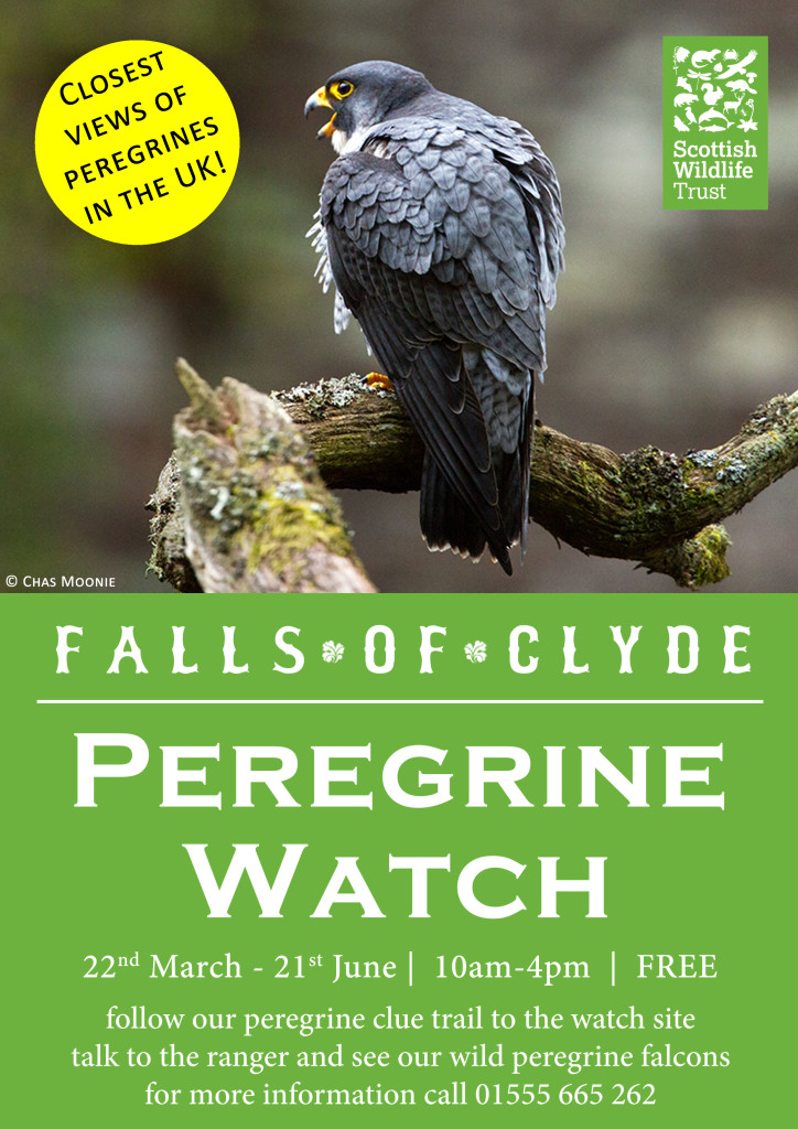 Peregrine-Watch-A4