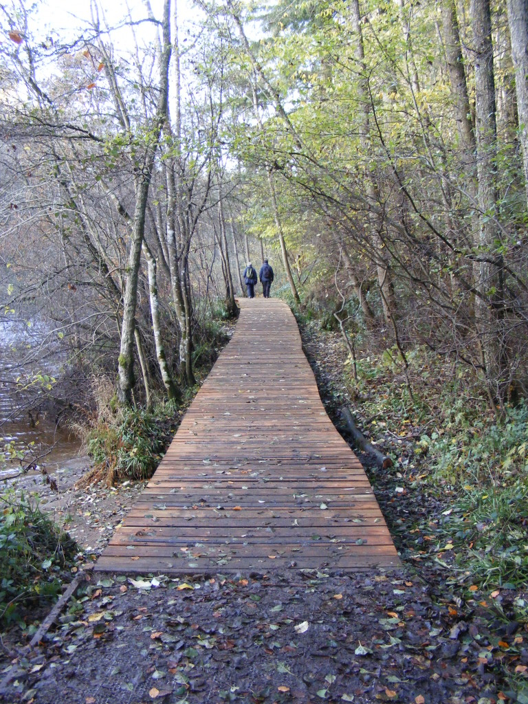 Falls of Clyde boardwalk (c) Scottish Wildlife Trust