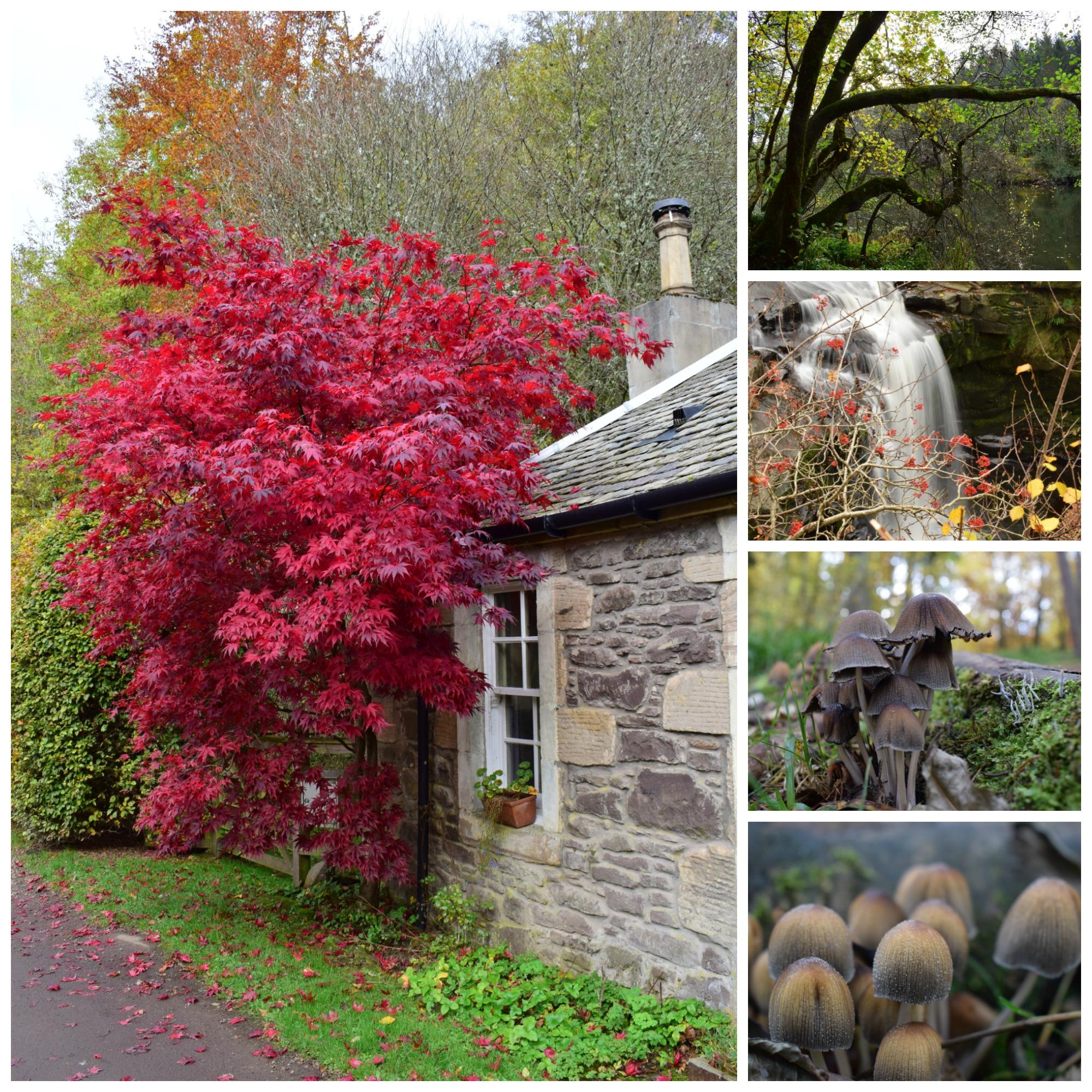 Red in Autumn (C) Tom McIntosh