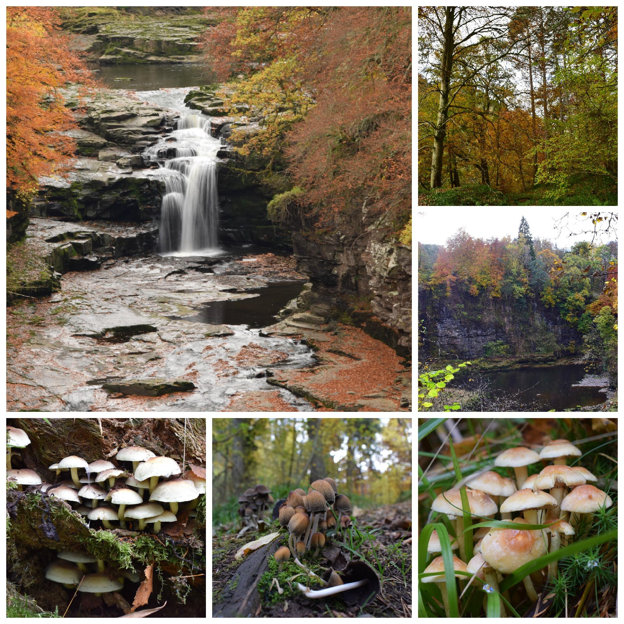 Waterfalls, trees and fabulous fungi (C) Tom McIntosh