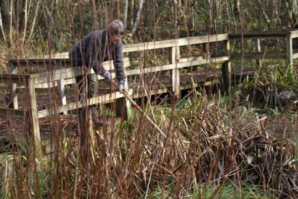 Margaret Lancaster weeding pond on reserve