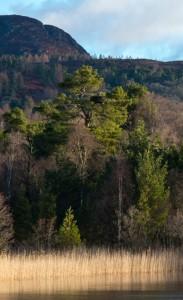 LOL-Tree-JClose-625x1024