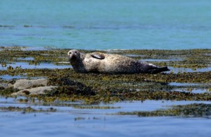 Common Seal RWW NON T SWT