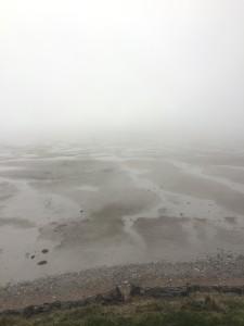 Montrose Basin covered in mist (c) Scottish Wildlife Trust