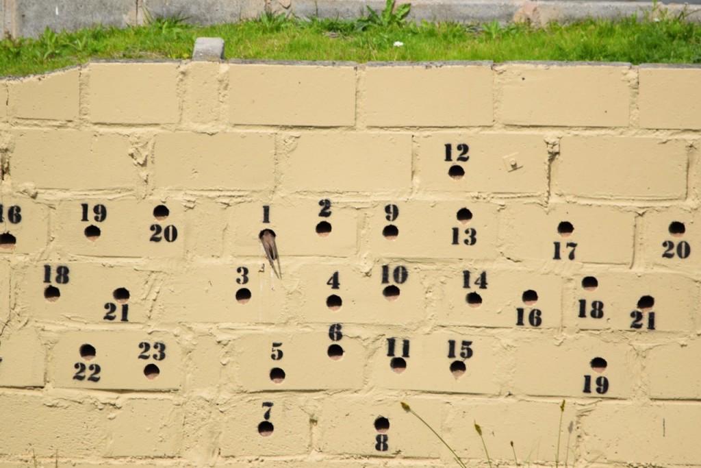 Sand Martin wall ©Ama