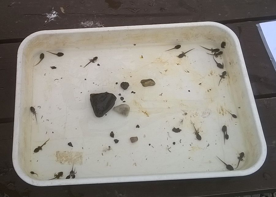 Dipping pond tray