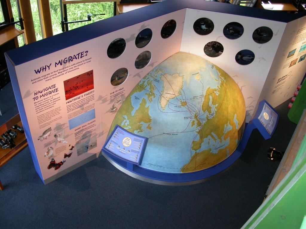 Migration globe