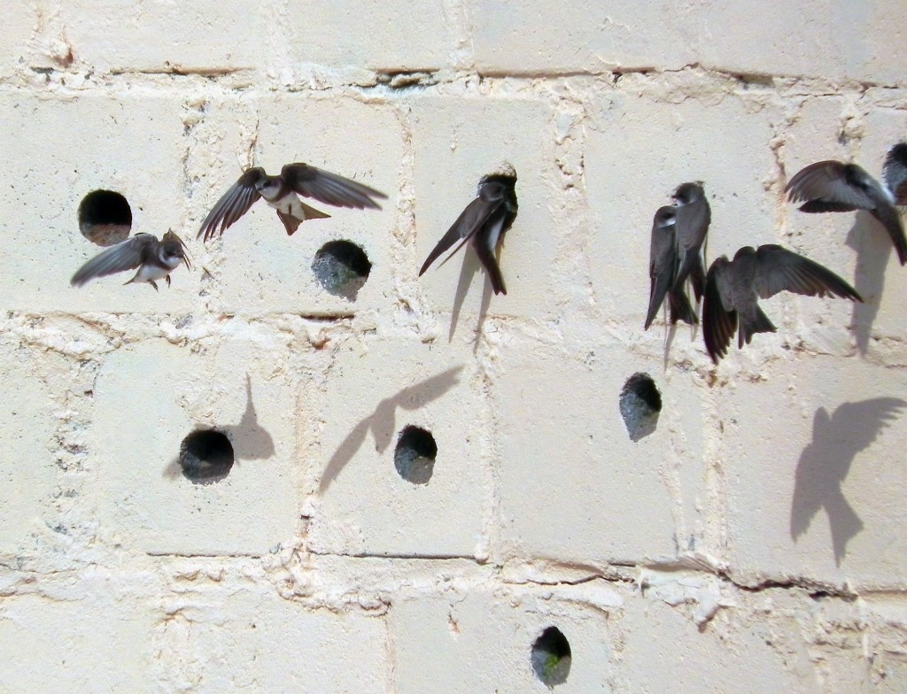 Sand Martin wall © Andy Wakelin